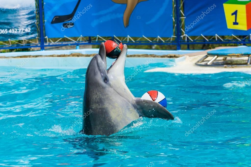 Dolphins and other marine animals performs trick