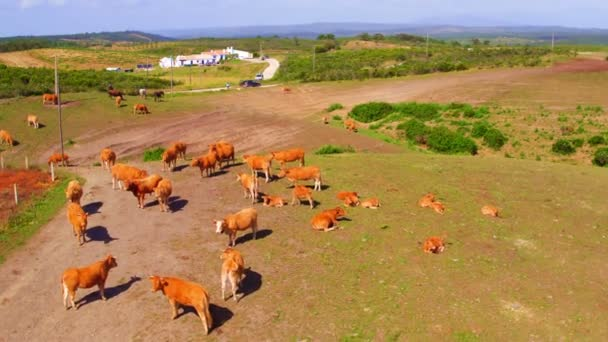Antenna, a tehén, a vidéken, a Portugália