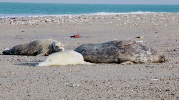 Mladí tuleni na pláži