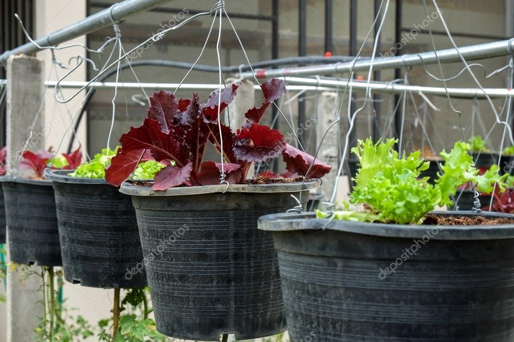 Gemüse Im Dekorierten Vertikaler Garten Idee In Der Stadt
