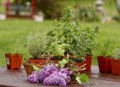 Herbs, Flowers, Planters and Gardening Tools