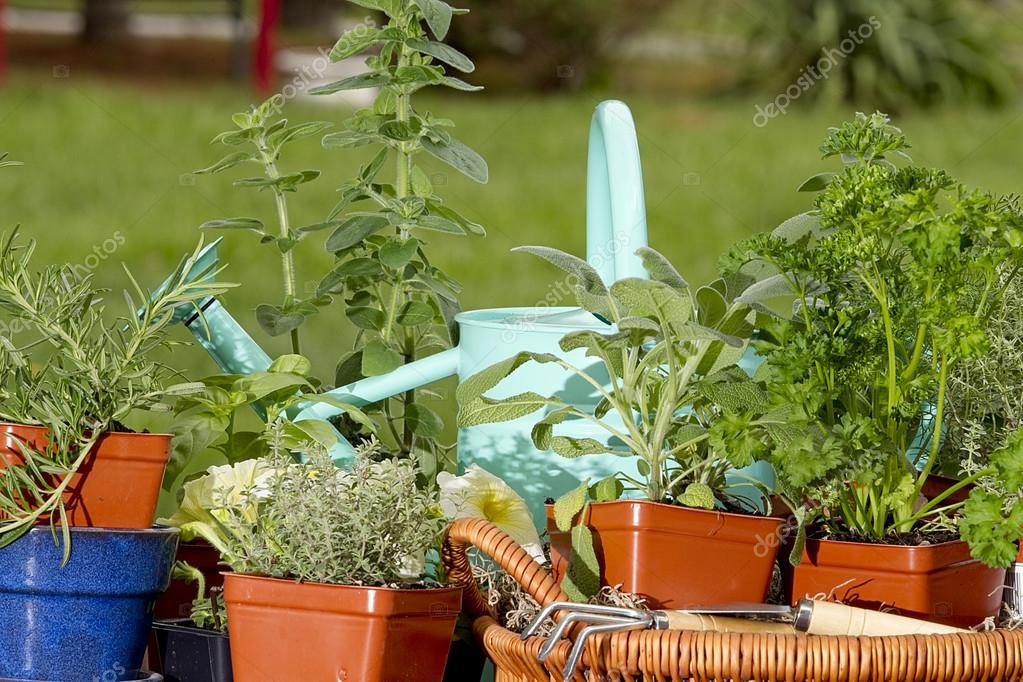 Assortment of Herbs Surrounding Blue Water Can