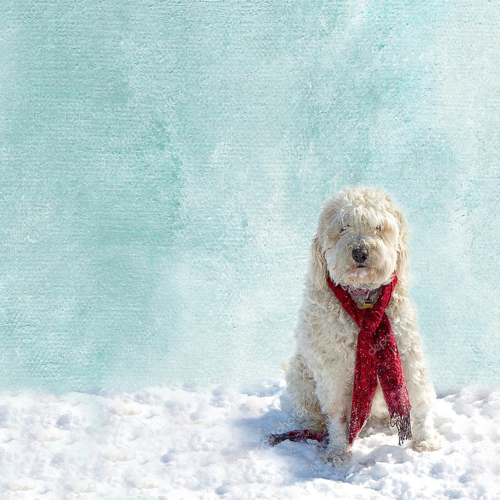 Textured blue/white Background Snow Scene with Dog