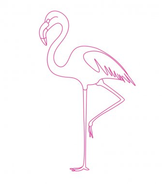 flamingo tropic bird