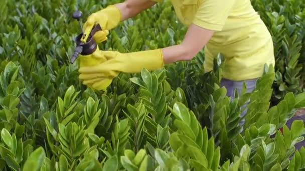 Detailní záběr nerozpoznatelné ženy ve žlutých gumových rukavicích stříkající vodu na rostliny v zahradě