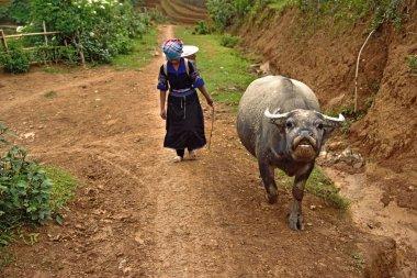 Mu Chang Chai, VIETNAM, JUN 13: Unidentified farmers working in
