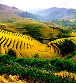 Fotografie Rice fields on terraced of Mu Cang Chai, YenBai, Vietnam