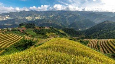 Rice fields on terraced of Mu Cang Chai, YenBai, Vietnam. Rice fields prepare the harvest at Northwest Vietnam