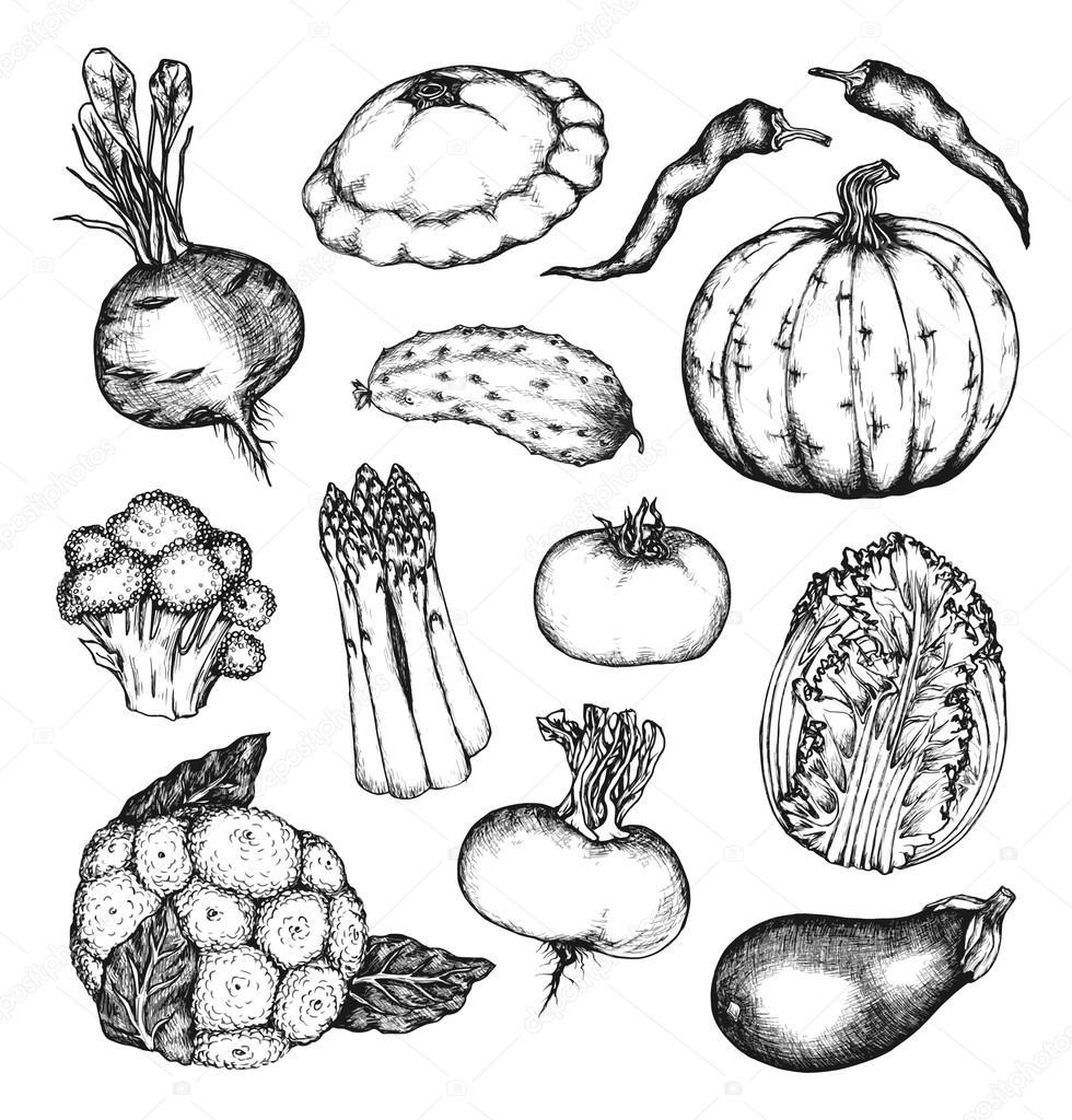 Organic natural vegetables set