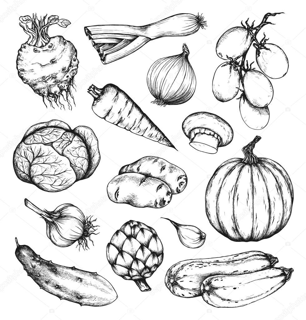Organic natural fresh vegetables set