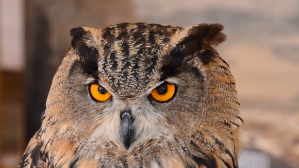 Eagle Owl v Zoo parku