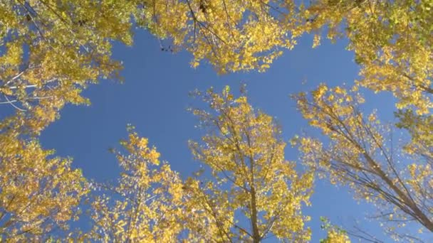 Podzimní listí na stromech na podzim slunečný den s modrou oblohou, pánev
