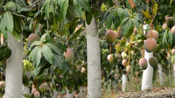 Image result for baby mango