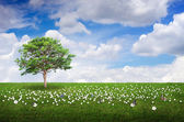 Field, flowers, trees and sky