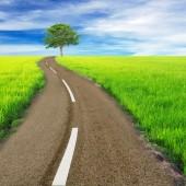cesta mezi zelenými poli