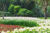 Fotografie bílé a červené květy