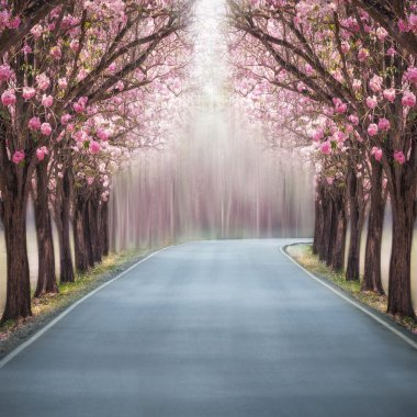 Pink trumpet trees.
