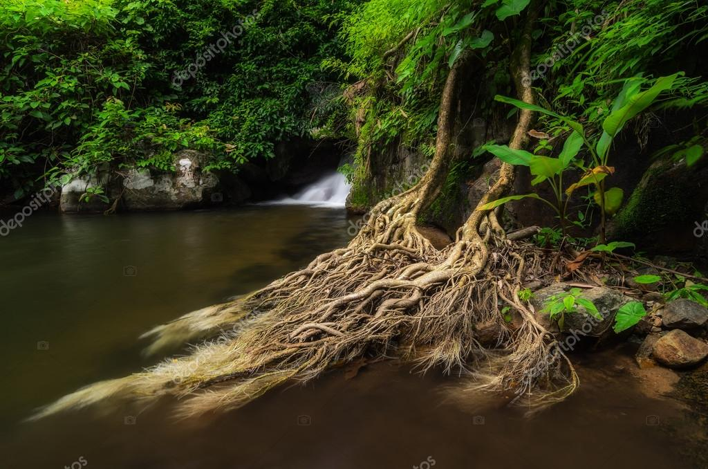 Waterfall with tree roots