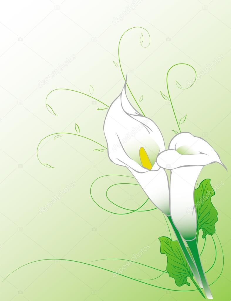 Calla Lilies Background Stock Vector Vectorjade 98556176