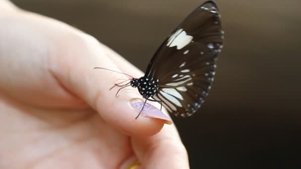 Butterfly in a womens hand