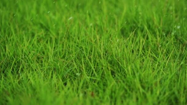 Wassertropfen sprühen auf Gras