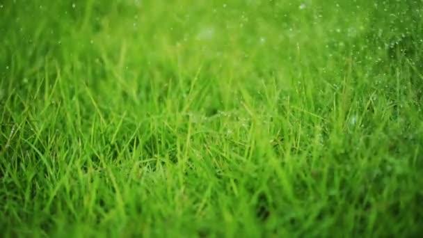 vízcseppek permeteznek le a fűre