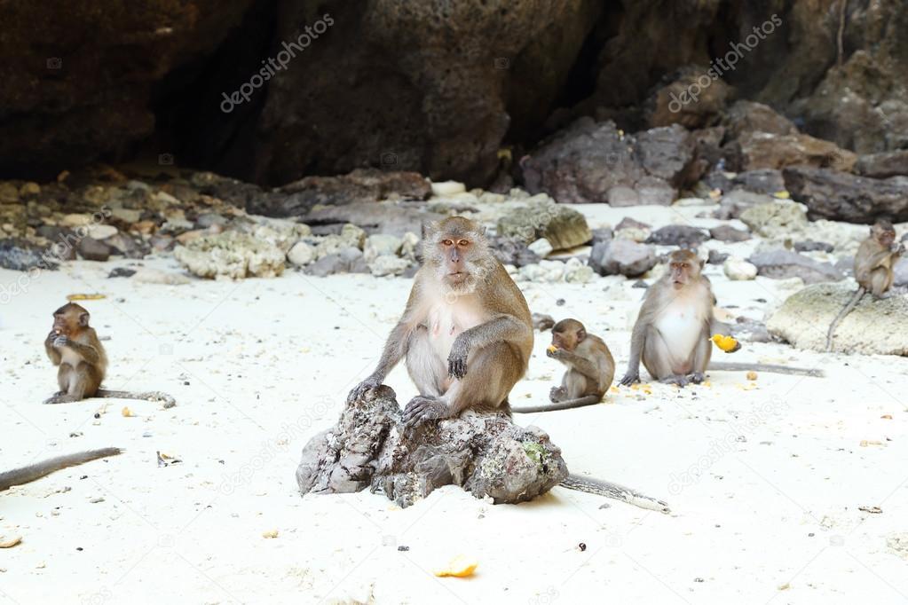 Urheberrecht Monkey Island