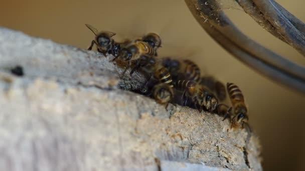 Bienen am Eingang zum Loch