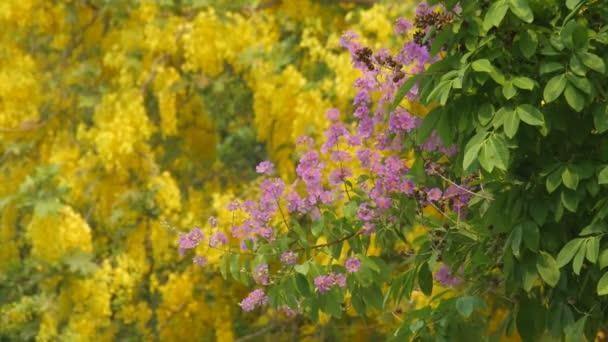 Queens krep myrta květiny se vítr