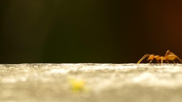 Tkadlec mravenci jsou spuštěny