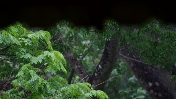 střecha a strom v dešti