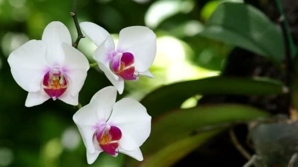 orchidej a vítr