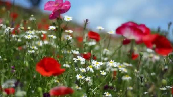 Detail z krásné měkké zaměření květy v létě