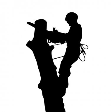 Arborist saws a tree at a height, silhouette