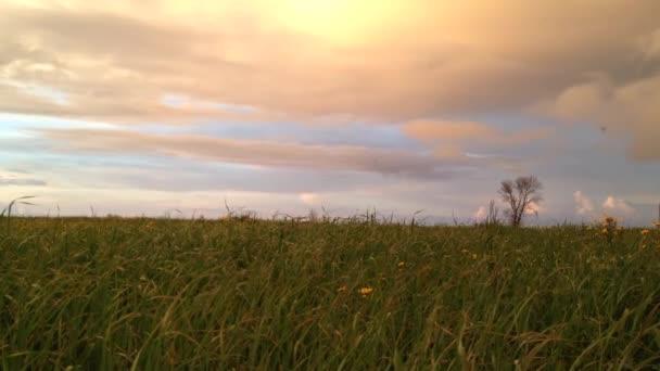 Krajina v oblasti žluté sedmikrásky a zamračená obloha při západu slunce timelapse