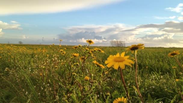 Krajina v oblasti žluté sedmikrásky a zamračená obloha při západu slunce