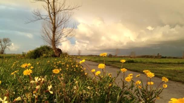 Krajina v oblasti žluté sedmikrásky a venkovské silnici. Zamračená obloha při západu slunce