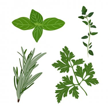Vector fresh parsley, thyme, rosemary, and basil herbs. Aromatic