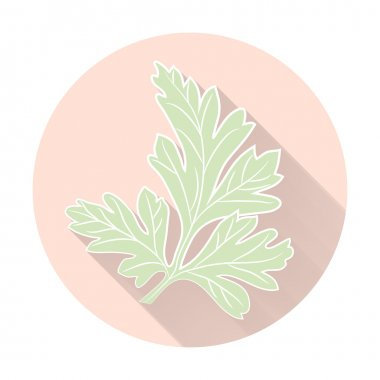Vector fresh parsley herbs. Aromatic leaves used to season meats, poultry, stews, soups.