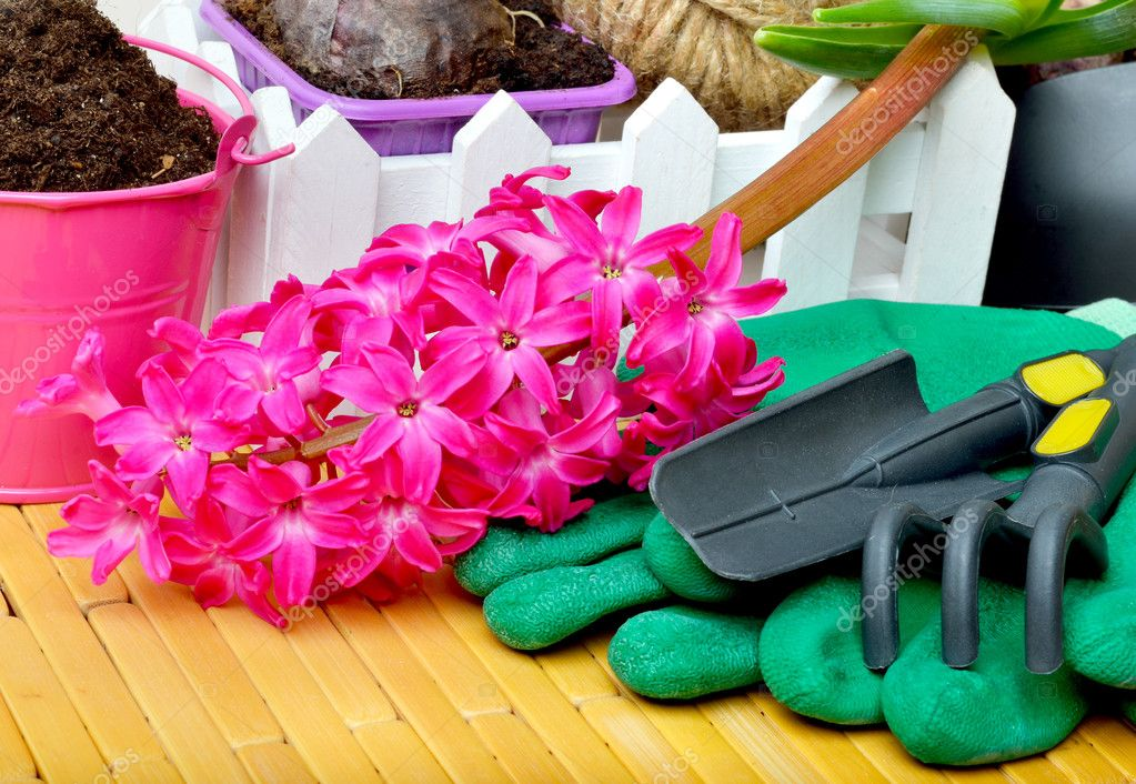 Hyacinth flowers with gardening tools.