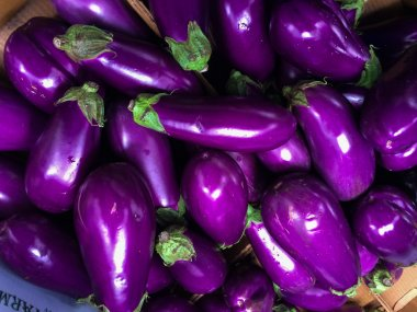 Pile of freshly picked eggplants
