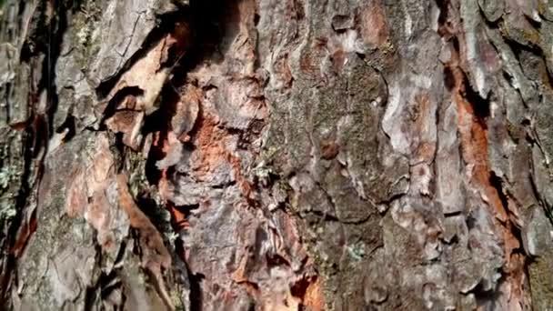 Close up of tree bark. The camera moves up.