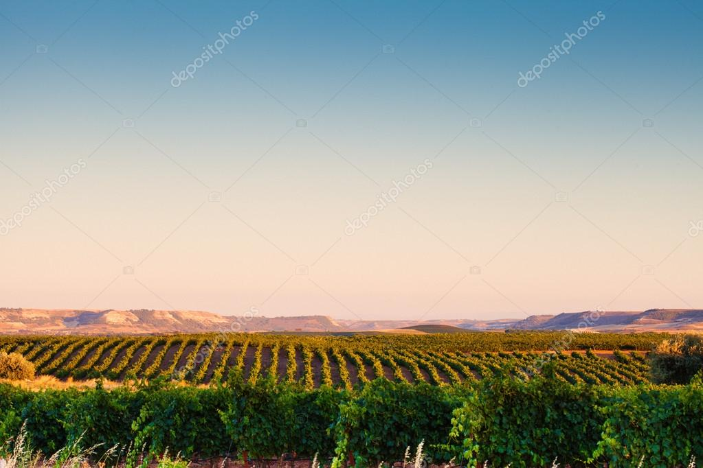 Spanish vineyard landscape