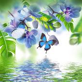 Fotografie Tropické orchideje a motýli