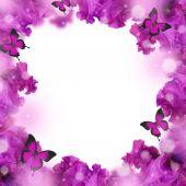 Csodálatos háttér friss iris virágok vízcseppek