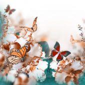 tavaszi Ibolya és a pillangó