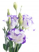 Fotografie Bouquet of delicate roses