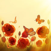 Fotografie Red poppies and butterfly