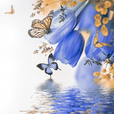 Blue tulips with mimosa and butterflies