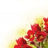 Fényképek tulipán virágok mimosa